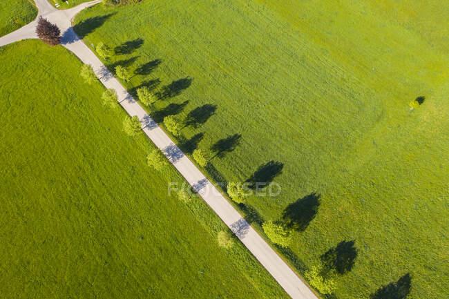 Alemania, Baviera, Eurasburgo, Vista aérea de la carretera arbolada en verano - foto de stock