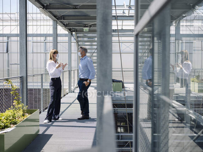 Colleagues wearing masks discussing while standing on footbridge in greenhouse — Stock Photo