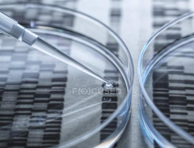 Тестування ДНК-зразка в чашці Петрі з результатами ДНК-тесту на задньому плані — стокове фото