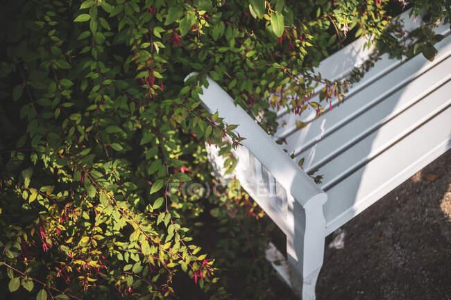 Banco blanco frente al arbusto verde - foto de stock