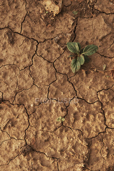 Cracked dry soil in the mud — Stock Photo