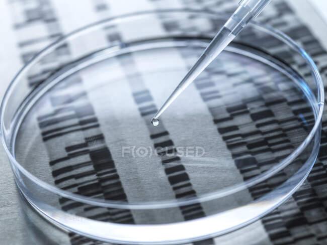 Експерименти по зразку ДНК в чашці Петрі з результатами ДНК на задньому плані — стокове фото