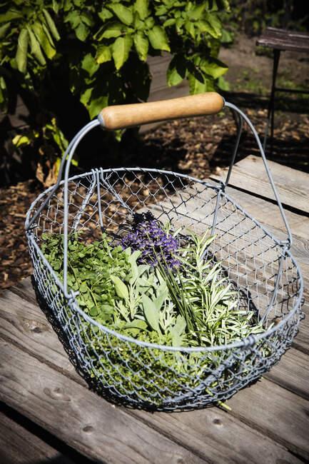 Cesta con hierbas recién cosechadas - foto de stock