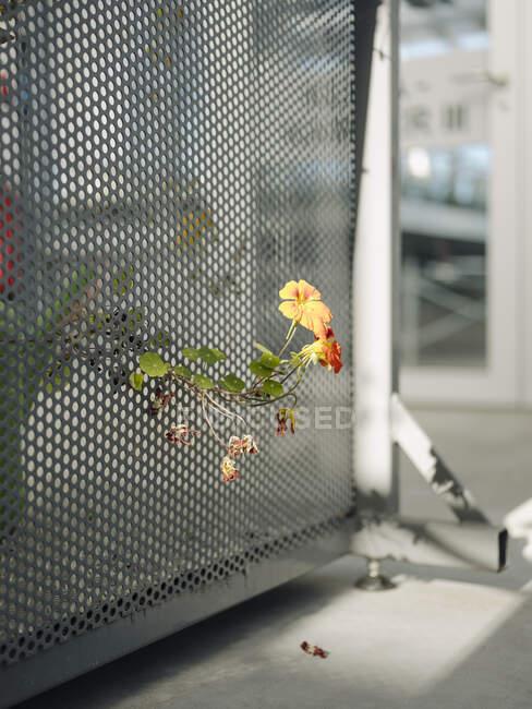 Primo piano dei fiori che crescono in serra — Foto stock