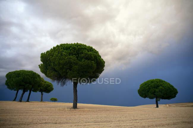 Сосны в заповеднике Лагунас-де-Виллафафила на облачном рассвете — стоковое фото