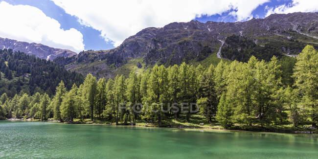 Panorama della sponda boschiva di Lai da Palpuogna in estate — Foto stock