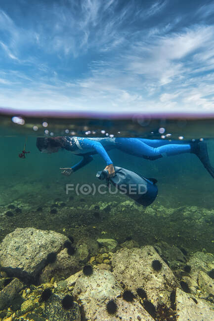 Mujer en traje de buceo recogiendo erizo de mar mientras bucea bajo el mar - foto de stock