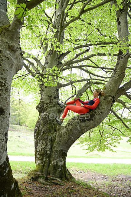 Женщина отдыхает на ветке букового дерева в лесу — стоковое фото
