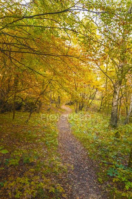 Vista ad alto angolo del sentiero visto nella foresta durante l'autunno — Foto stock