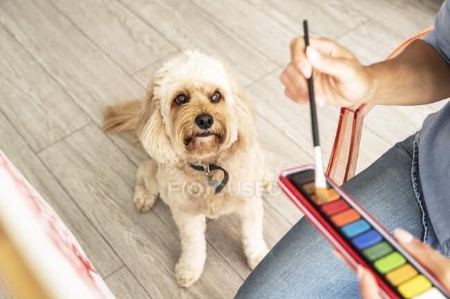 Primer plano de la mujer madura sentada con el perro mientras pinta sobre lienzo en casa - foto de stock