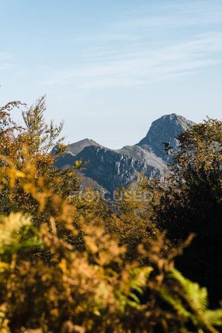 Alberi autunnali con cime di Picos de Europa sullo sfondo — Foto stock