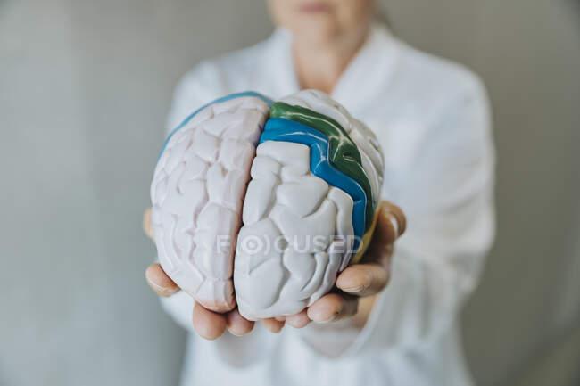 Científica mostrando cerebro humano artificial mientras está parada en la clínica - foto de stock