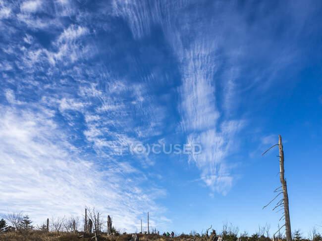 Cielo blu sulla foresta bavarese — Foto stock