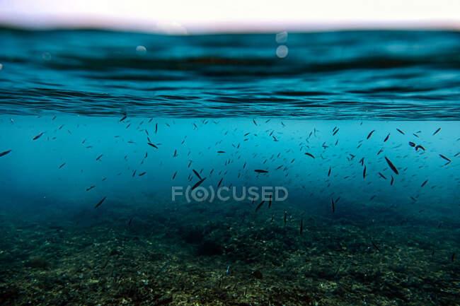 Vista subacquea dei pesci che nuotano nel Mar Arabico — Foto stock