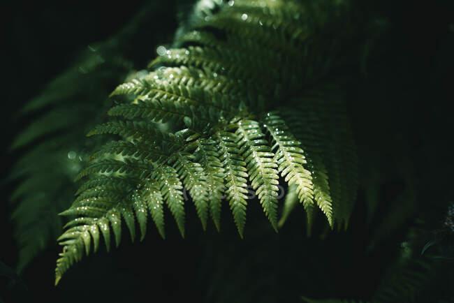 Helecho verde creciendo en el bosque - foto de stock
