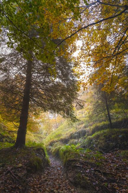 Árvores vistas na floresta durante a temporada de outono — Fotografia de Stock