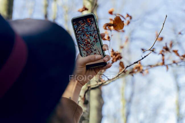 Mujer tomando fotos de la hoja de otoño a través del teléfono móvil en el bosque - foto de stock