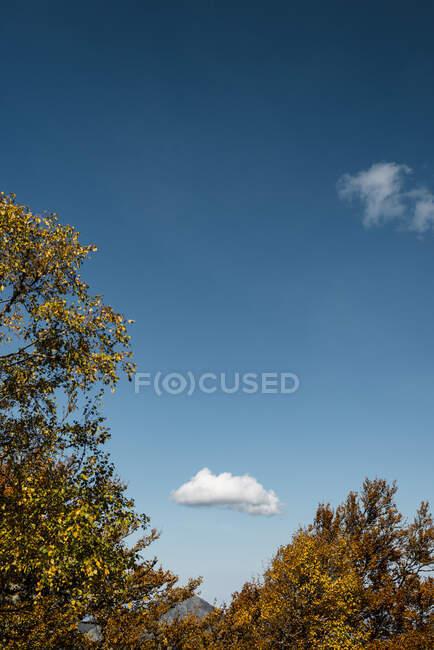 Cielo limpido blu sopra alberi autunnali — Foto stock
