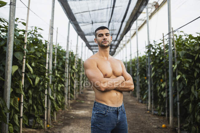 Young shirtless man standing with arms crossed at alley amidst plants in greenhouse — Stock Photo