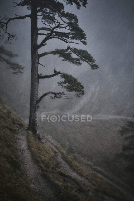 A vertical photo of a lonely man in a forest — Stock Photo
