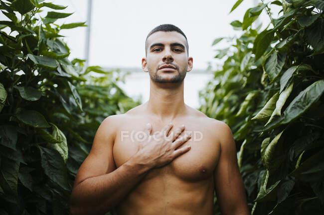 Hombre guapo sin camisa de pie con la mano en el pecho en medio de plantas en el invernadero - foto de stock