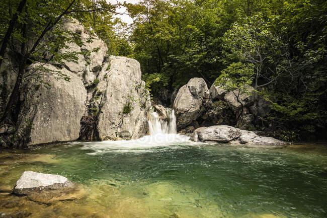 Cascada y arroyo en el bosque - foto de stock
