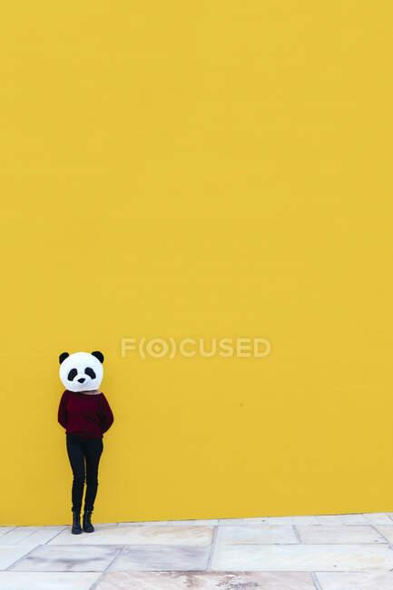 Самка в масці панди стоїть навпроти жовтої стіни. — стокове фото