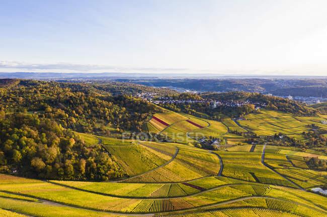 Germania, Baden-Wurttemberg, Rotenberg, Veduta aerea di vasti vigneti di campagna al tramonto dell'autunno — Foto stock