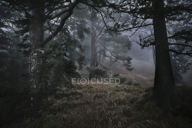 Beautiful view of the forest — Stock Photo