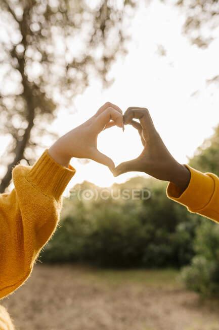 Пара, создающая форму сердца с руками в лесу — стоковое фото