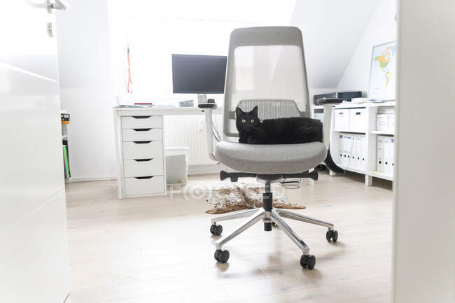 Black cat sitting on chair at home office — Stock Photo