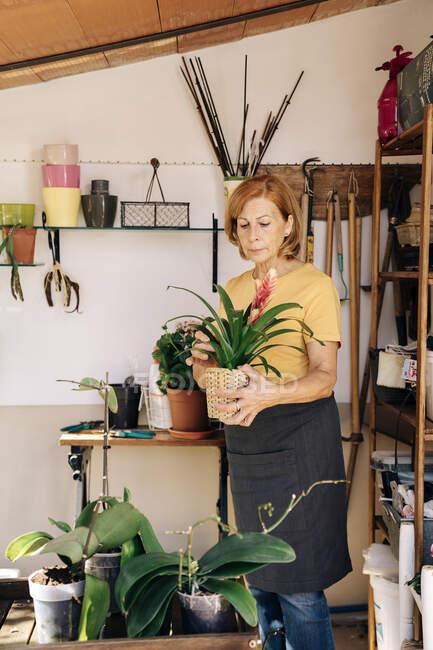 Mulher sênior com vaso planta no galpão — Fotografia de Stock