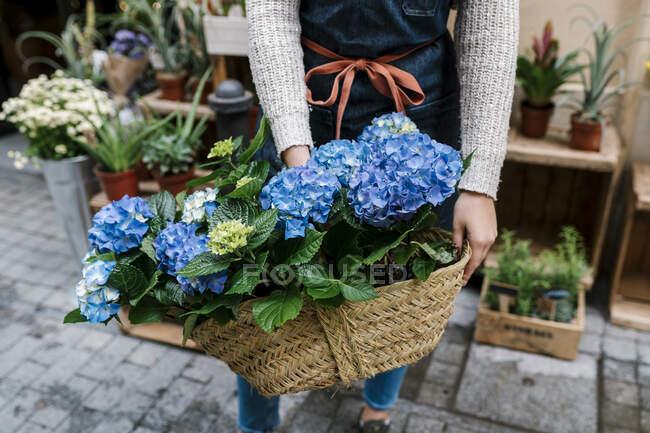 Молода жінка - флорист тримає кошик Гідрангеї в квітковому магазині. — стокове фото