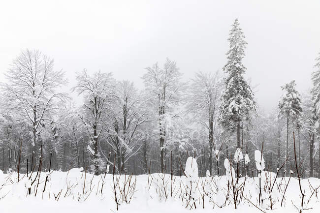 Trees and bushes covered with deep snow — Stock Photo