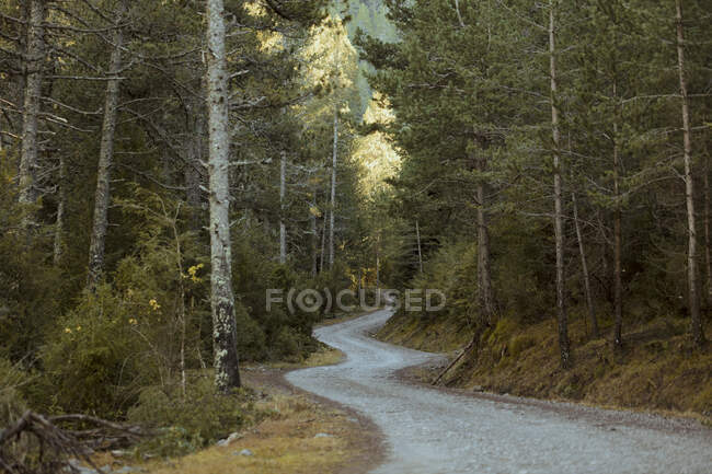 Spain, Pyrenees, Winding mountain road through forest — Stock Photo