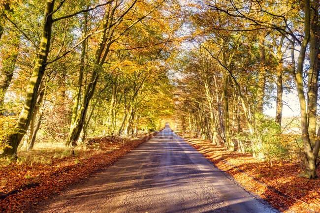Regno Unito, Scozia, East Lothian, Scenic autumn road — Foto stock