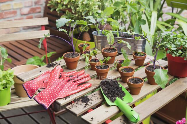 Трави та овочі, вирощені на балконі. — стокове фото