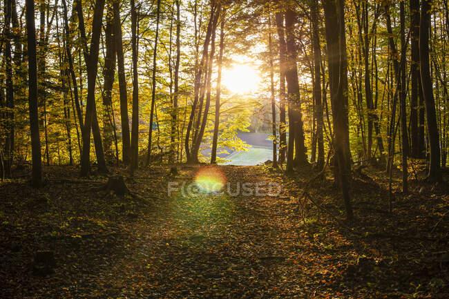 La strada in avanti fiume nella foresta durante il tramonto — Foto stock