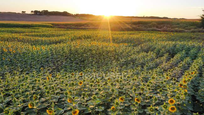 Повітряний вид на поле при заході сонця. — стокове фото