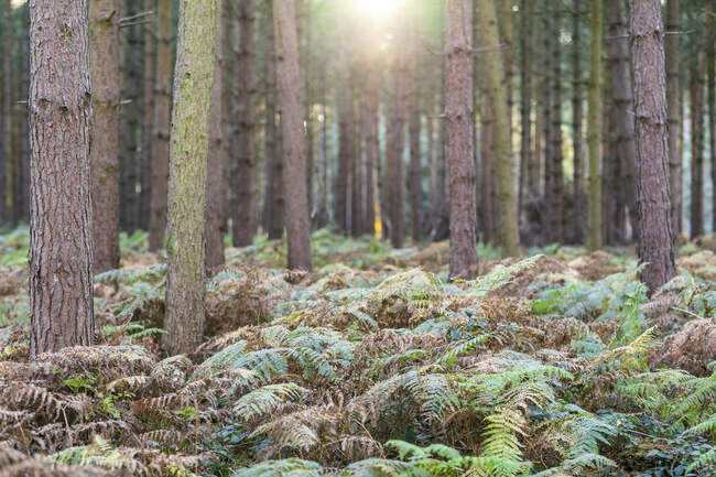 Trees growing amidst plants in forest during summer, Cannock Chase, UK — Stock Photo