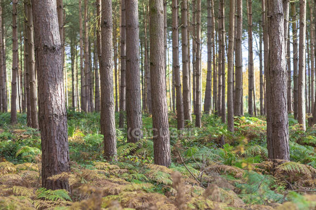 Trees and plants growing in forest at Cannock Chase , UK — Stock Photo