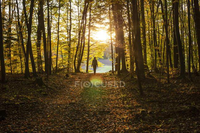 Жіночий дослідник, який ходить у лісі під час заходу сонця. — Stock Photo