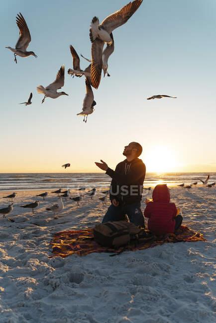 Чайки літають над батьком і дочкою на пляжі Сієста Кі під час заходу сонця. — стокове фото