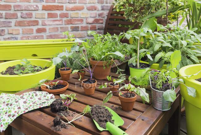 Заражені кущі рослин і інструменти для садівництва на балконі — стокове фото