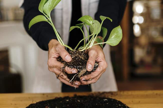Las manos del hombre haciendo planta de kokedama en casa - foto de stock