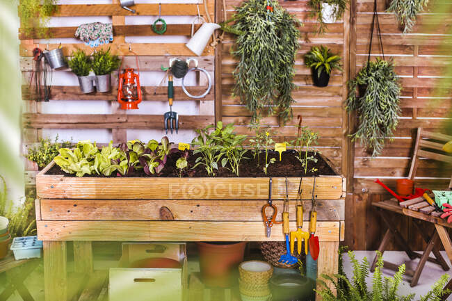 Urban garden built of pallets with vegetable seedlings on terrace — Stock Photo