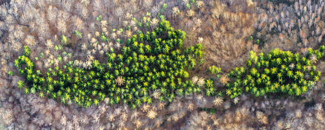 Germany, Baden Wurttemberg, Aerial view of Swabian Forest — Stock Photo