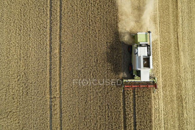 Drone view of combine harvester collecting grain in summer — Stock Photo
