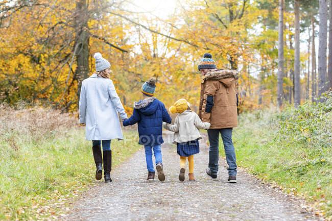 Родители держатся за руки детей во время прогулки по лесной тропе — стоковое фото