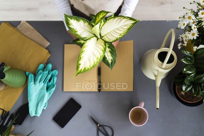 Женский цветочный холдинг завод за столом в магазине — стоковое фото